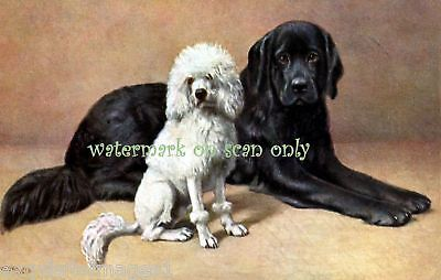 Antique Art~Newfoundland~Poodle~ Dogs~NEW Lg Note Cards