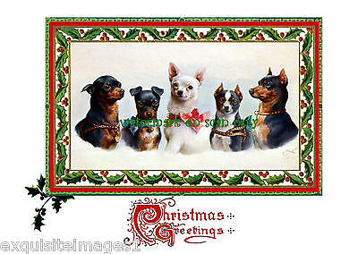 C.Reichert~Chihuahuas & Miniature Pinscher Dogs~ NEW Lge Christmas Note Cards