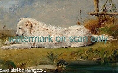 1860 Great Pyrenees Puppy Dog Laying in Grass near Water~NEW Large.Note Cards