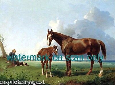 c1835 Brown Horse & Foal w White Blazes~Newfoundland Dog~Man~NEW Lge Note Cards