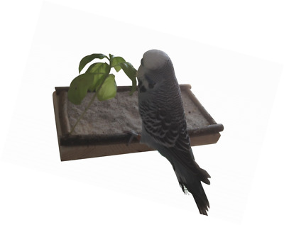 Platform for Birds, the best bird accessories for Birdcage or aviary