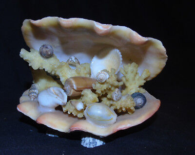 Lovely Ornament of Shells and Coral in a Clam Shell
