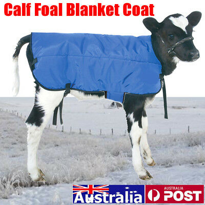 AU Bovine Baby Calf Foal Blanket Coat Warmer Waterproof + Gussets & Belly Band
