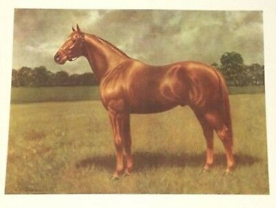 Vintage 1963 Print CW ANDERSON MAN OR WAR THOROUGHBRED RACE CHAMPION  HORSE ART