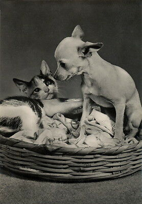 Vintg Photo~Chihuahua Puppy Dog~Basket w Kitten~Kitty Cat~NEW Large Note Cards