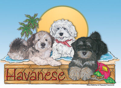 Havanese Blank Note Cards Boxed