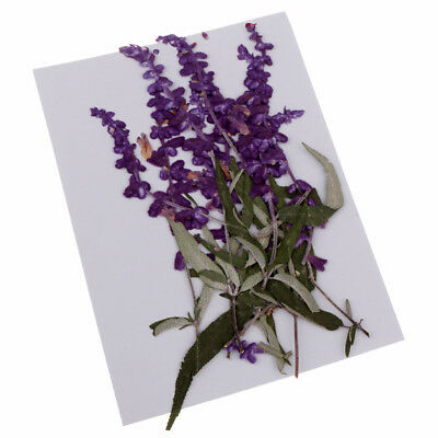 10x Pressed Natural Dried Flowers Purple Flower for DIY Craft Scrapbooking