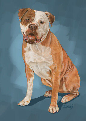 American Bulldog Blank Note Cards Boxed