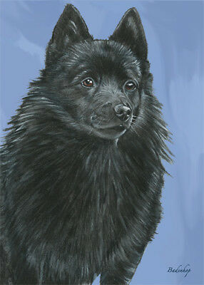 Schipperke Blank Note Cards Boxed