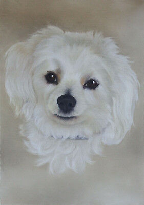 Pet Portrait in Pastel - Commissioned Custom Artwork from Your Photo