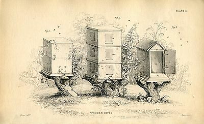 Bees Bee-keeping Honey Production Apiary 35 Vintage eBooks on a Data Disc