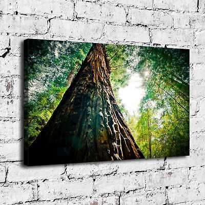 """12""""x20""""Orman Nature Painting HD Print on Canvas Home Decor Room Wall Art Picture"""