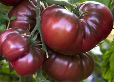 Seeds Tomato Black Elephant Giant Vegetable Organic Heirloom Russian Ukraine