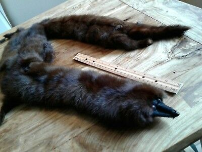 Mink Fur Stole Or Boa Whole Body Furs  Brown