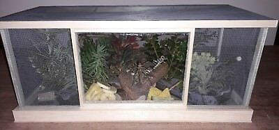Locust Breeding Colony Starter Kit  vivarium (Includes live insects)(feeders)