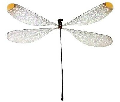 One Real Dragonfly Damselfly Clear Yellow Microstigma Rotundatum Wings Closed