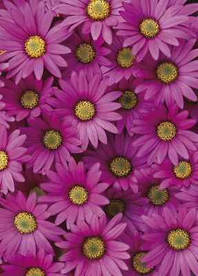 2 sheets of 70x50cm quality eco-friendly wrap DAISY gift-wrap
