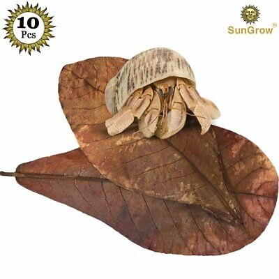 SunGrow 10 Natural Hermit Crab Leaves : Decorative, Shrimps & fishes love them