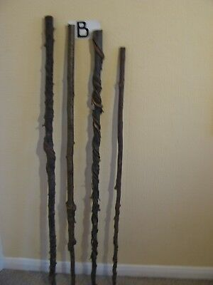 Four new twisted hazel walking stick shanks seasoned and steam straightened