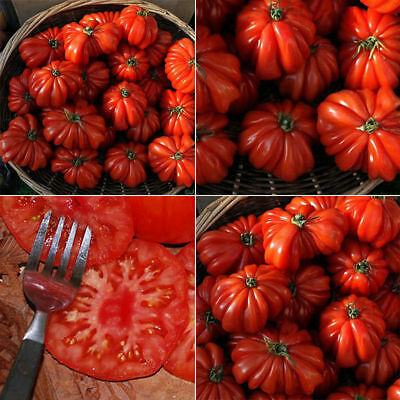 50pcs Hot Rare Sweet Tomato Fruit Vegetable Seeds Home Garden Plant Seeds New