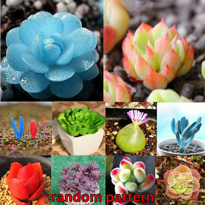 120pcs Rare Mixed Lithops Seed Living Stones Succulent Cactus Potted Plant Seeds