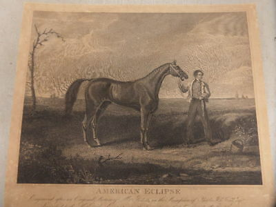 Antique Engraving of Great American Race Horse American Eclipse
