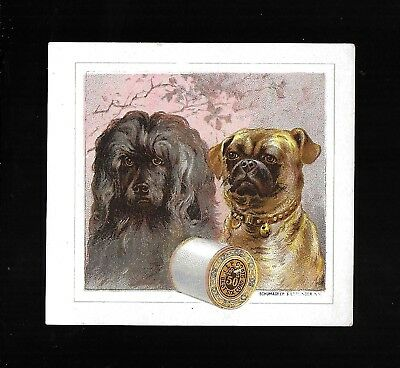 Poodle and Pug Dogs-1880s Victorian Trade Card