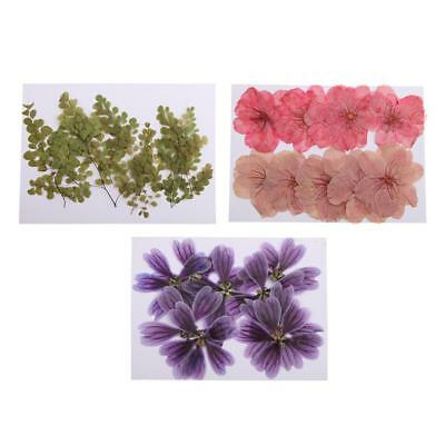 30 PCS Mixed Natural Pressed Dried Flowers for DIY Card Making Art Crafts