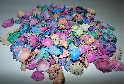 1/2 Pound Of Dyed Star Limpet Sea Shells, Beach Decor Craft Tropical Nautical