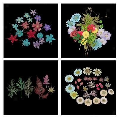 Real Pressed Press Dried Flower Filler For Epoxy Resin Pendant Jewelry Craft