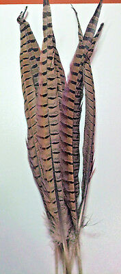 Natural Ringneck Pheasant Tail Feathers (40 - 45cm), For Fly Tying