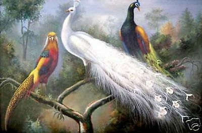 ZWPT404  modern hand-painted beautiful peacocks wall art oil painting on canvas