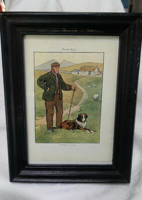 Shepherd and Border Collie Dog~Ireland~Sheep in the Pasture~vintage in frame