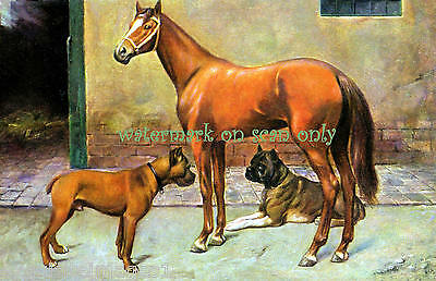 Antique Art~Handsome Horse in Stable with Boxer Dogs~ NEW Large Note Cards