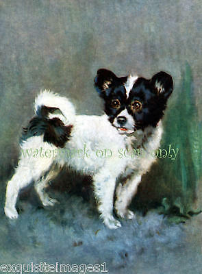 Antique Art~Papillon Dog~Puppy~NEW Lge Note Cards