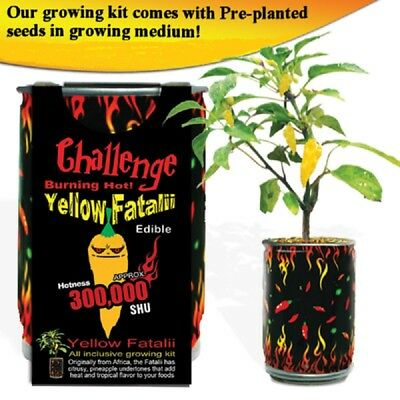 Yellow Fatalii Growing Kit All Included Grow Your Own Peppers Seeds
