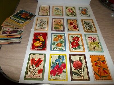Collectable Lot Of Vintage  Coles Swap Cards Of Flowers - 35 X  In Total.