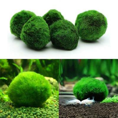 Moss Ball Live Algae Aquarium Plant Fish Tank Landscape Ornament 3-4cm
