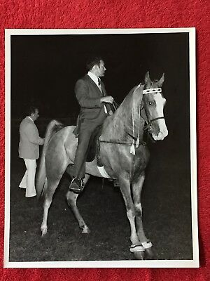 "1970s GREEAR STUDIO REAL PHOTO / WALKING HORSE /  MARION, VIRGINIA 10"" x 8"""