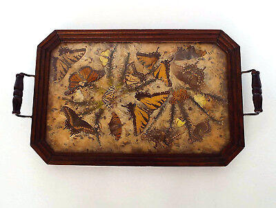 Stunning Mission Style Pressed Butterfly Botanical Wood Tray Arts & Crafts Deco