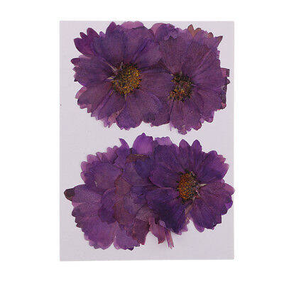 20 Pcs Pressed Dried Real Flowers Coreopsis for Handmade Card Making Craft