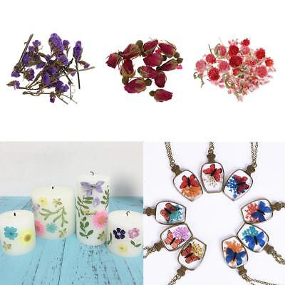 4g/Pack Real Flower Dried Flowers Embellishments for DIY Phone Case Decor