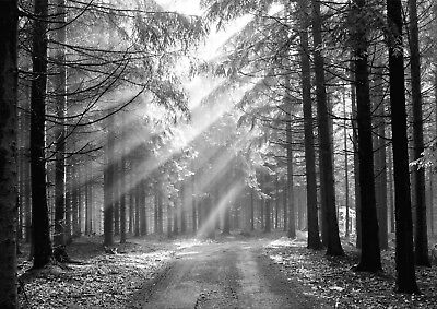 Forest Nature Landscape Black & White Giant Poster - A4 A3 A2 A1 Sizes