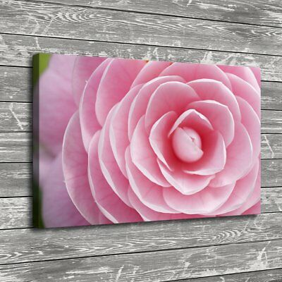 Rose Petals Pink Flower Painting HD Print on Canvas Home Decor Wall Art Picture