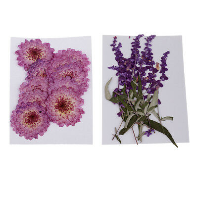 20 Pieces Pressed Dried Flowers Purple Flowers for DIY Phone Case Decor