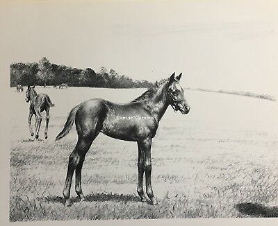 Vintage 1952  Print CW ANDERSON Thoroughbred Filly Foal Colt HORSE ART Brave One