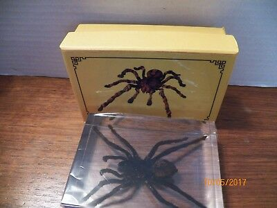 Real Tarantula Spider Insect Specimens In Lucite Paperweight Acrylic
