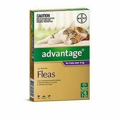 Advantage for Large Cats over 4 kg - 6 Pack