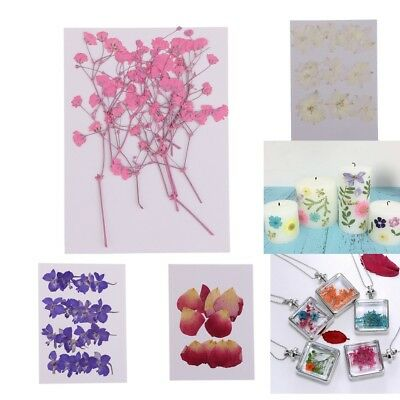 10/20pcs Real Pressed Dried Flowers Resin Jewelry Craft DIY Card Embellishments