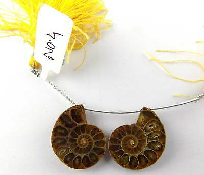 2 Pcs Natural Ammonite Snake Fossil Pair Slices Shells Uneven 30x24mm  For Sale